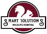 Smart Solutions Wildlife Removal
